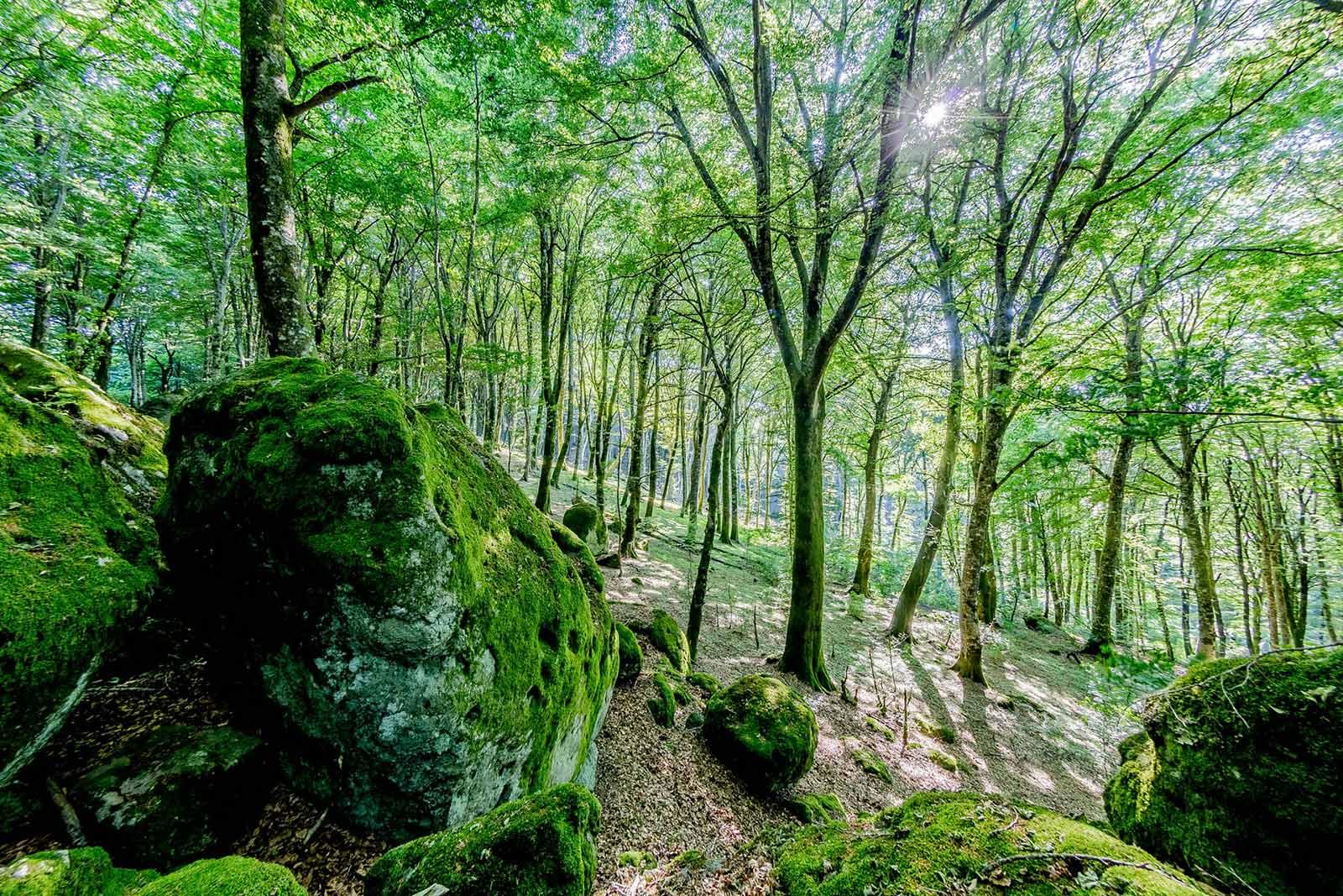 Peperino pietra vulcanica dei Monti Cimini